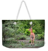 A Male Impala In Lake Manyara National Park. Tanzania. Africa. Weekender Tote Bag