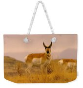 A Pronghorn Gazes Weekender Tote Bag