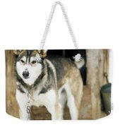 A Sled Dog Stands By Its Kennel Weekender Tote Bag