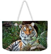 A Tigers Glance Weekender Tote Bag