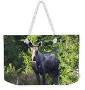 A Young Moose  Weekender Tote Bag