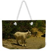 A Young Mountain Goat Weekender Tote Bag