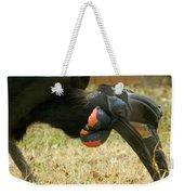Abyssinian Ground Hornbill Weekender Tote Bag