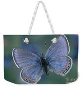 Acmon Blue Butterfly Plebejus Acmon Weekender Tote Bag