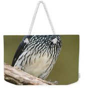 Acorn Woodpecker Melanerpes Weekender Tote Bag
