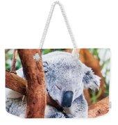 Adorable Koala Bear Taking A Nap Sleeping On A Tree Weekender Tote Bag