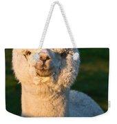 Adorable White Alpaca Portrait Weekender Tote Bag