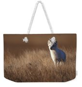 Adult Arctic Fox On The Tundra In Late Weekender Tote Bag
