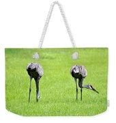 Adult Florida Sandhill Cranes Grus Canadensis Pratensis I Usa Weekender Tote Bag