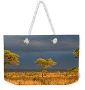 African Acacia Sunrise Weekender Tote Bag