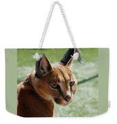 African Caracal Lynx  Weekender Tote Bag