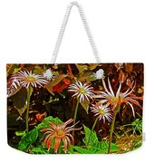 African Daisies In Aswan Botanical Garden On Plantation Island In Aswan-egypt Weekender Tote Bag