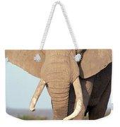 African Elephant Bull Amboseli Weekender Tote Bag