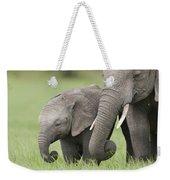 African Elephant Juvenile And Calf Kenya Weekender Tote Bag