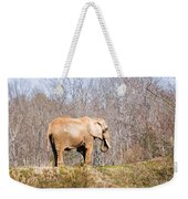 African Elephant On A Hill Weekender Tote Bag