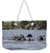 African Elephants Swimming In The Chobe River Weekender Tote Bag