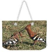 African Hoopoe Feeding Young Weekender Tote Bag