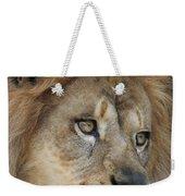 African Lion #5 Weekender Tote Bag