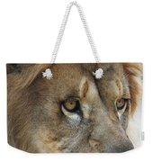 African Lion #8 Weekender Tote Bag