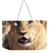 African Lion Cub Resting Weekender Tote Bag