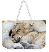 African Lion Cub Sleeping Weekender Tote Bag