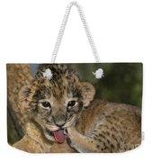 African Lion Cub Wildlife Rescue Weekender Tote Bag