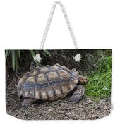 African Spurred Tortoise Weekender Tote Bag