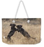 African Wild Dogs Playing Lycaon Pictus Weekender Tote Bag