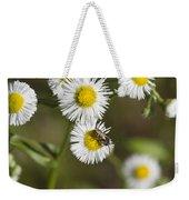 Alabama Wildflower Robin's Plantain - Erigeron Pulchellus Weekender Tote Bag