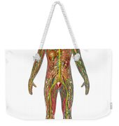 All Body Systems In Male Anatomy Weekender Tote Bag