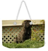 All Right Who Has My Chew Toy Weekender Tote Bag by Jeff Swan