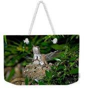 Allens Hummingbird Chicks Weekender Tote Bag