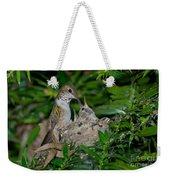 Allens Hummingbird Feeds Young Weekender Tote Bag