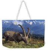 Alpin Ibex Male Grazing Weekender Tote Bag by Konrad Wothe
