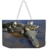 American Alligators In Shallows Florida Weekender Tote Bag
