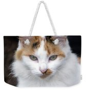 American Calico Cat Portrait Weekender Tote Bag