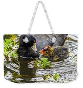American Coot And Chick Weekender Tote Bag