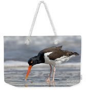 American Oystercatcher Feeding On Clam Weekender Tote Bag