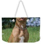 American Pit Bull Terrier Weekender Tote Bag