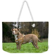 American Staffordshire Terrier Weekender Tote Bag