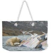 An Adult Polar Bear Ursus Maritimus Weekender Tote Bag
