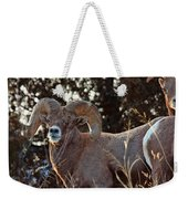 An Icy Stare Weekender Tote Bag