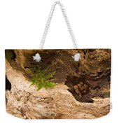 An Isolated Moss Plant Weekender Tote Bag