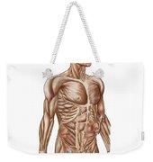 Anatomy Of Human Abdominal Muscles Weekender Tote Bag