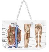 Anatomy Of Human Bone Marrow Weekender Tote Bag