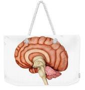 Anatomy Of Human Brain, Side View Weekender Tote Bag