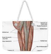 Anatomy Of Human Thigh Muscles Weekender Tote Bag