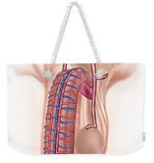 Anatomy Of Male Reproductive Organs Weekender Tote Bag by Stocktrek Images