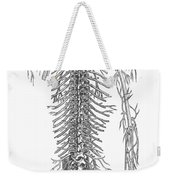 Anatomy: Spinal Nerves Weekender Tote Bag