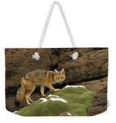 Andean Red Fox Altiplano Bolivia Weekender Tote Bag